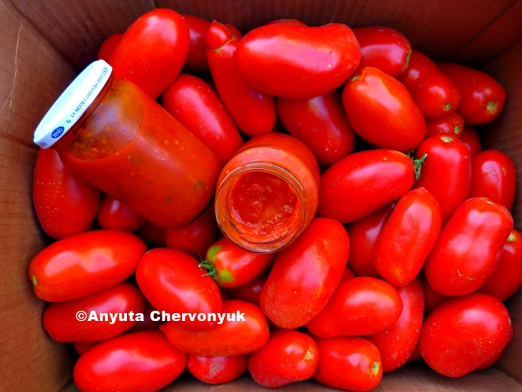 tomates532